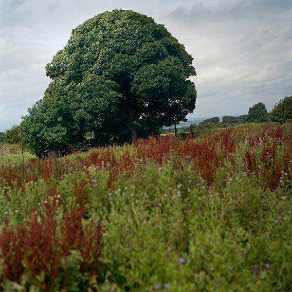 celtes_156_10_arbre