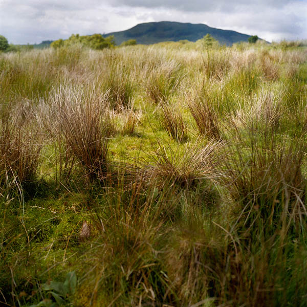 celtes_169-08_nephin