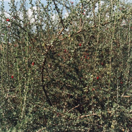 tanis_02_15_vegetation