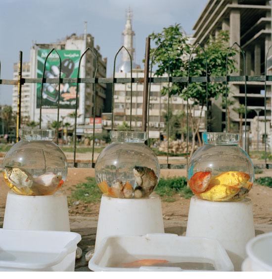 damas2010_15